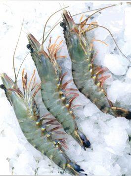 Black Tiger Head On Shrimps